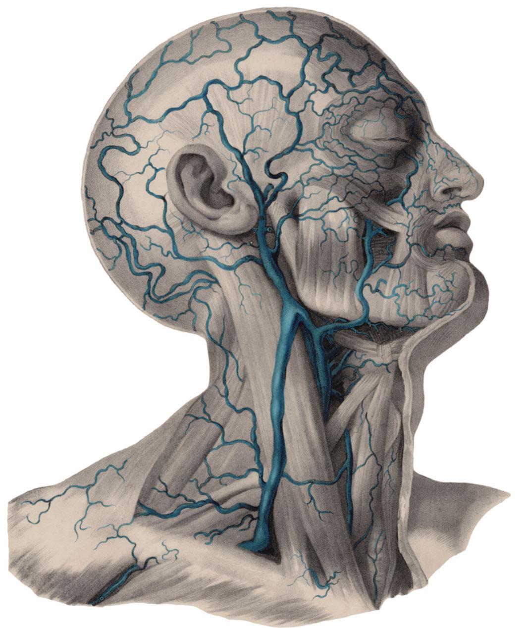 how deep is the jugular vein